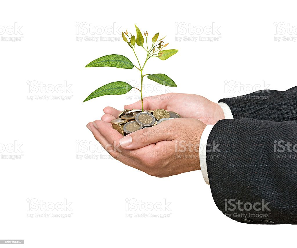 Eucalyptus sapling growing from coins royalty-free stock photo