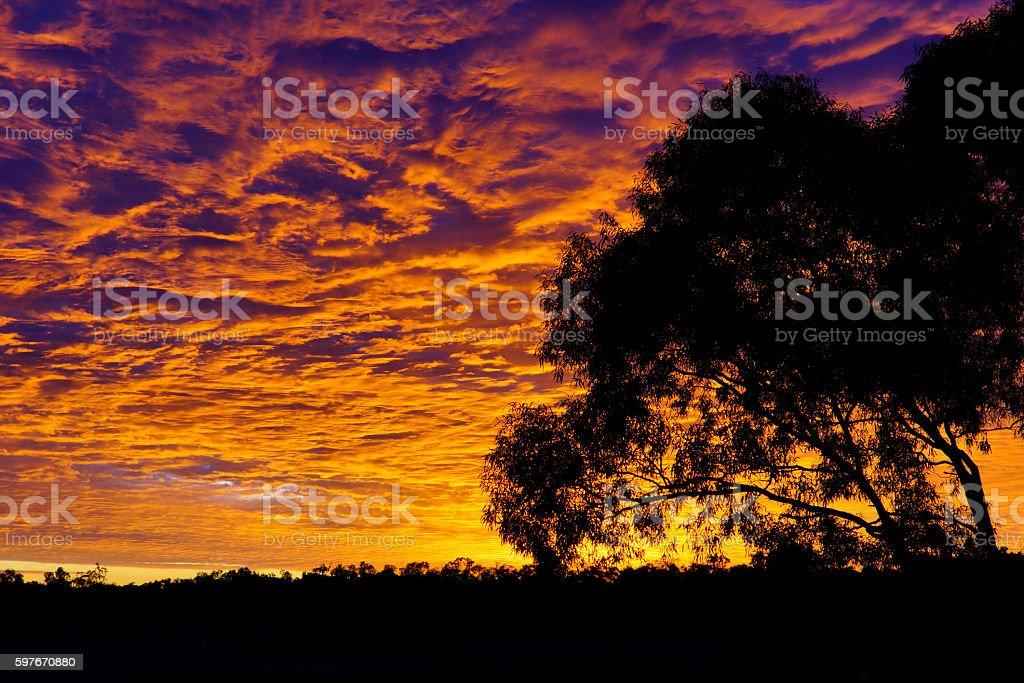 Eucalyptus Sunset stock photo