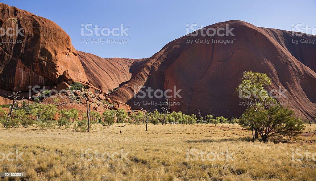 Eucalyptus Tree and Sedimentary Rock in Northern Territory, Australia stock photo