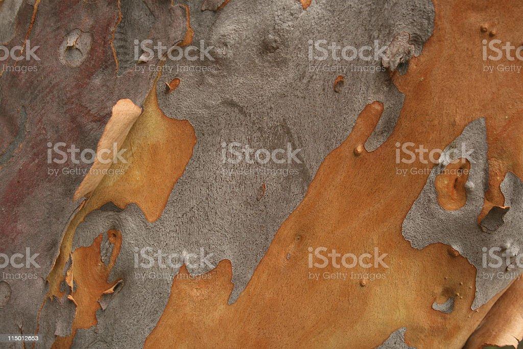 Eucalyptus Tree Bark royalty-free stock photo