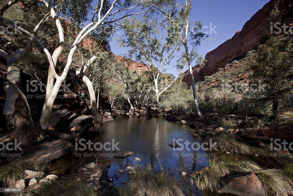 Eucalyptus tree in King Canyon stock photo