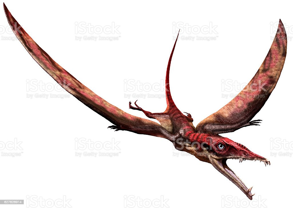 Eudimorphodon stock photo