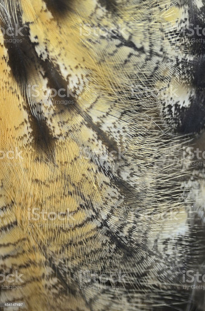 Eurasian Eagle Owl feathers royalty-free stock photo