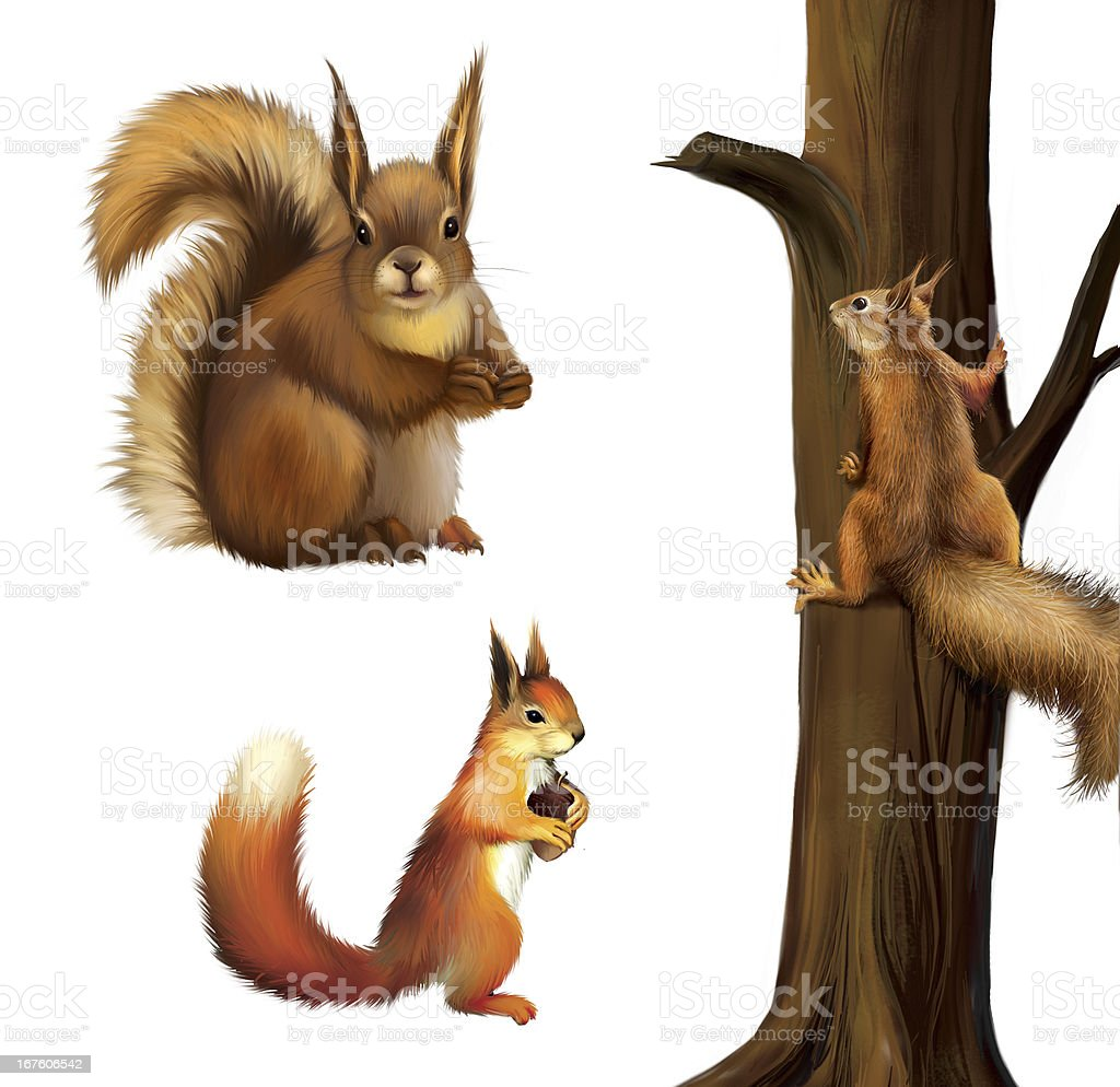 Eurasian Red squirrel with cane royalty-free stock photo