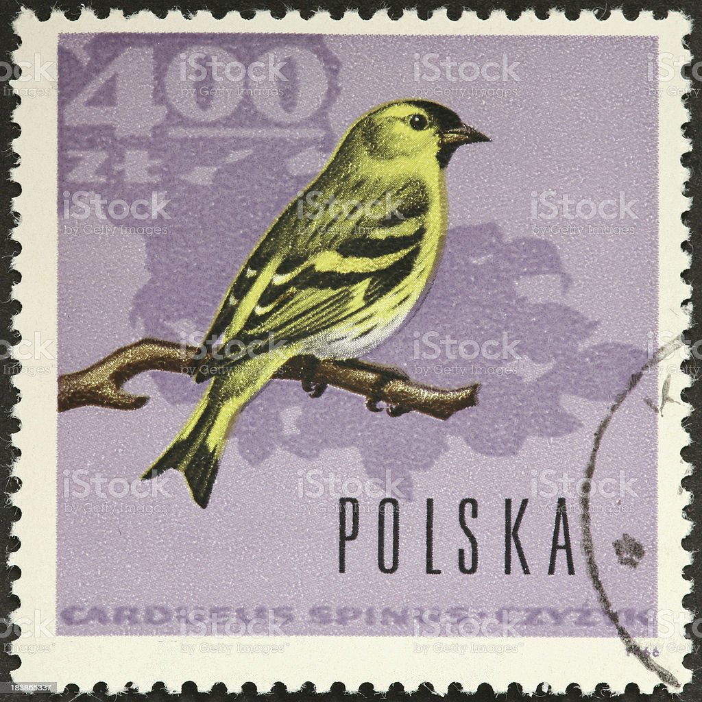 'Eurasian Siskin, Carduelis spinus, on a Polish stamp' stock photo