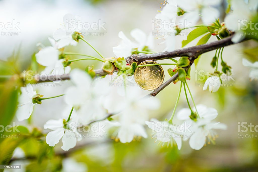 20 Euro Cents in the blooming tree stock photo