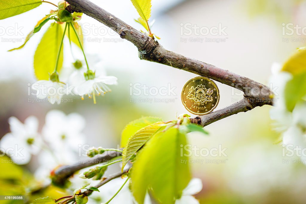 Euro coin in the blooming tree stock photo
