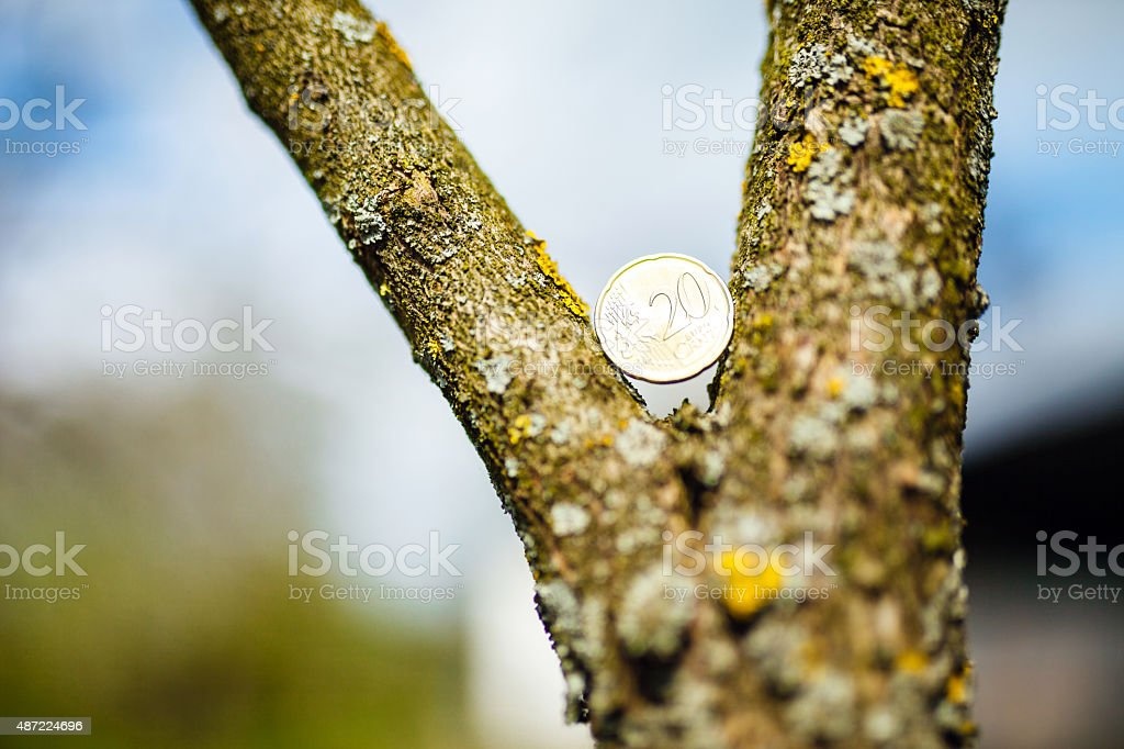 Euro coin in tree stock photo