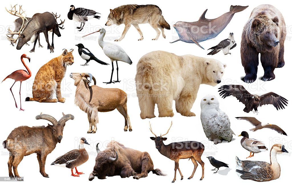 europe animals isolated stock photo
