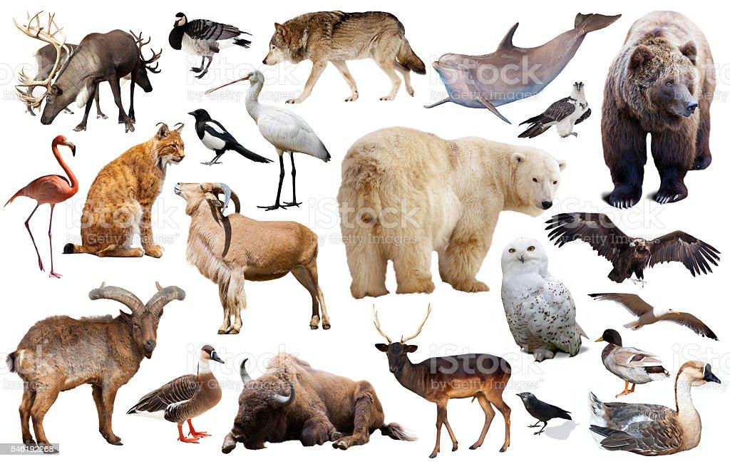 europe animals isolated stock photo