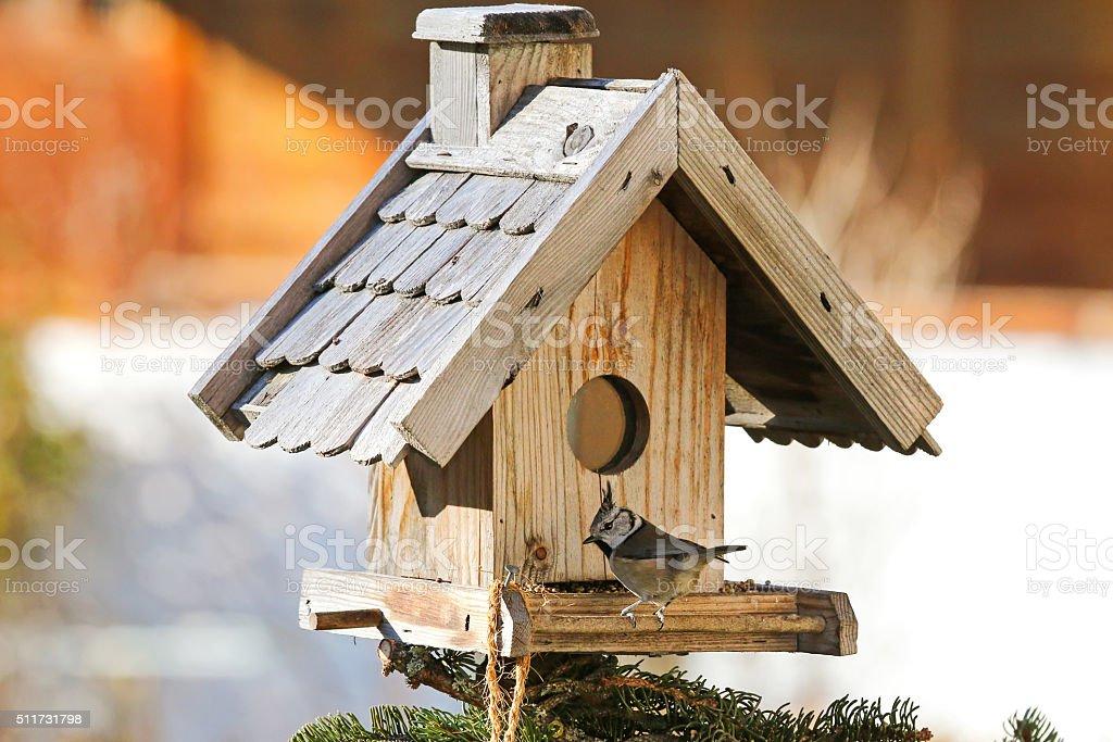 European Crested Tit bird on bird feeder with hemp seeds stock photo