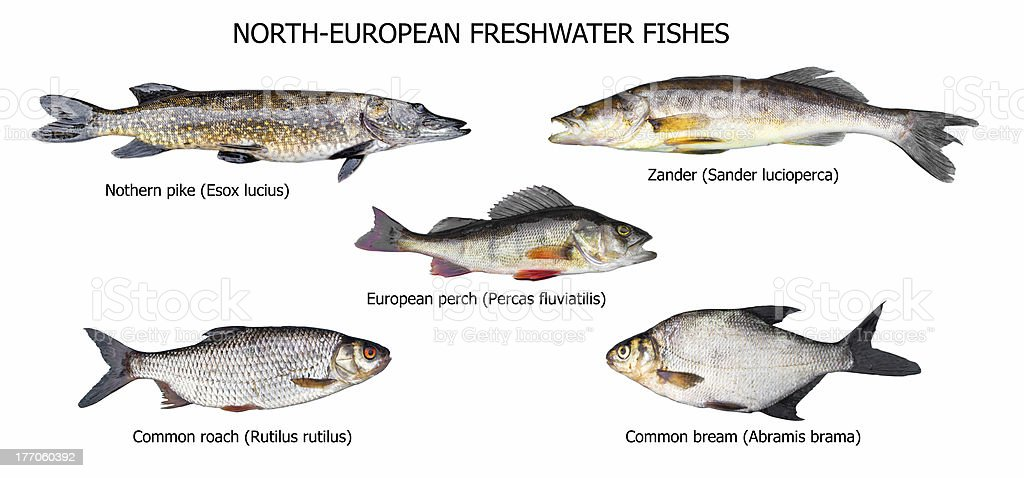 European fishes stock photo