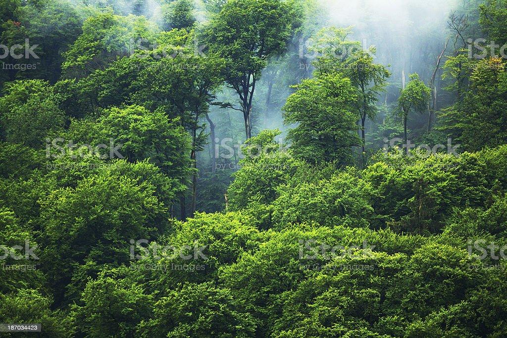 European forest royalty-free stock photo