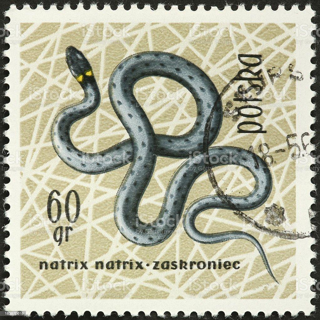 European grass snake on a Polish postage stamp stock photo