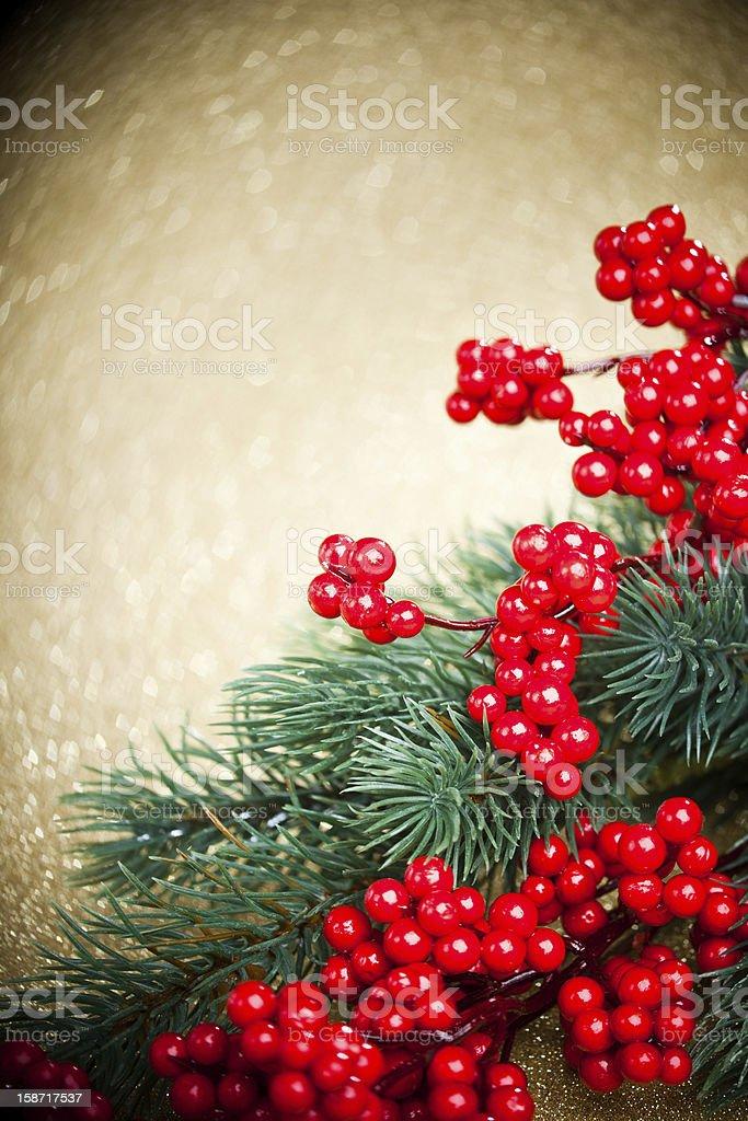 Europeia de holly e Abeto árvore no fundo, DOF Raso foto de stock royalty-free