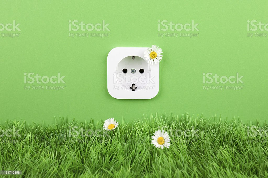 European outlet, green grass and daisy flowers stock photo