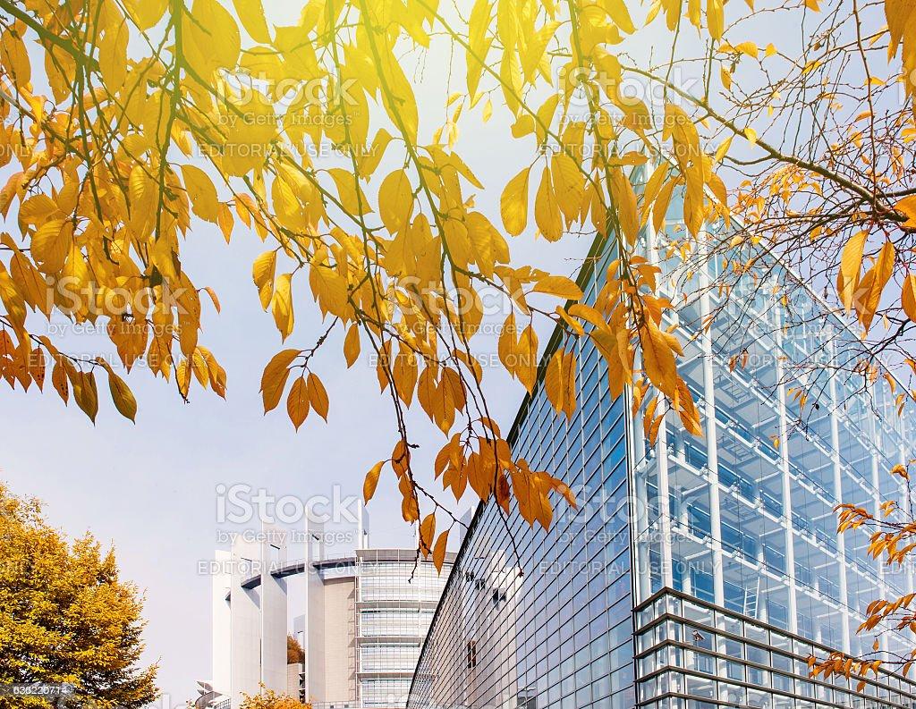 European Parliament facade building seen through yellow leaf tre stock photo