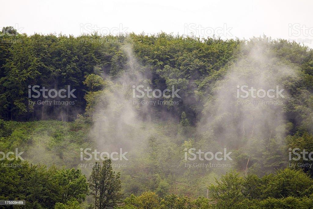European rainforest stock photo
