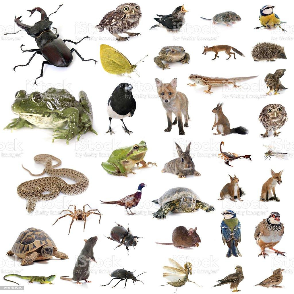 european wildlife in studio stock photo