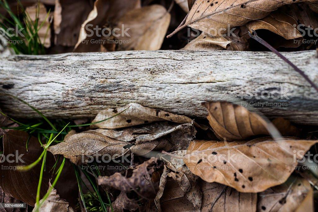 Evanescence stock photo