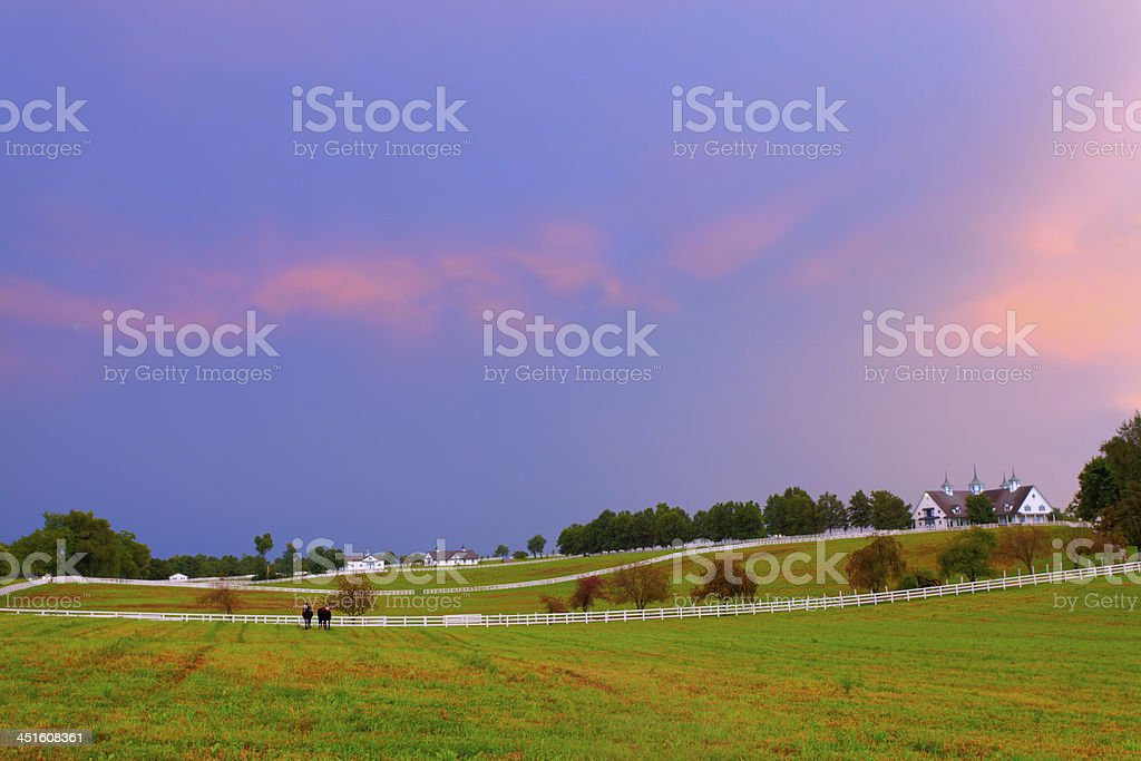 Evening at a horse farm stock photo