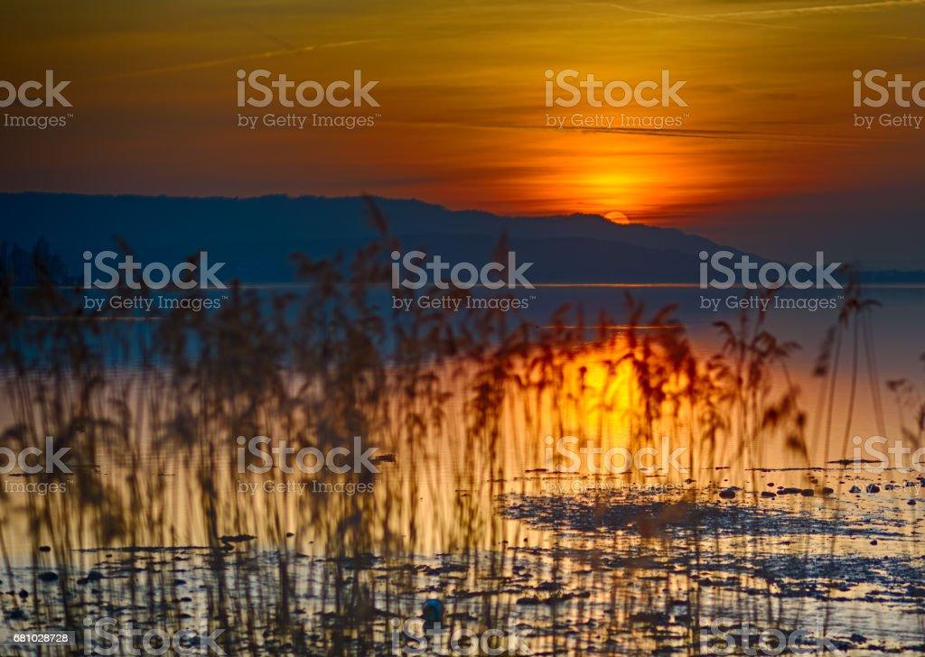 Abendstimmung am See mit Schilf stock photo