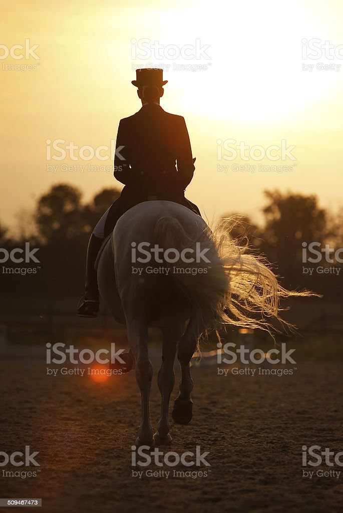 Evening dressage stock photo