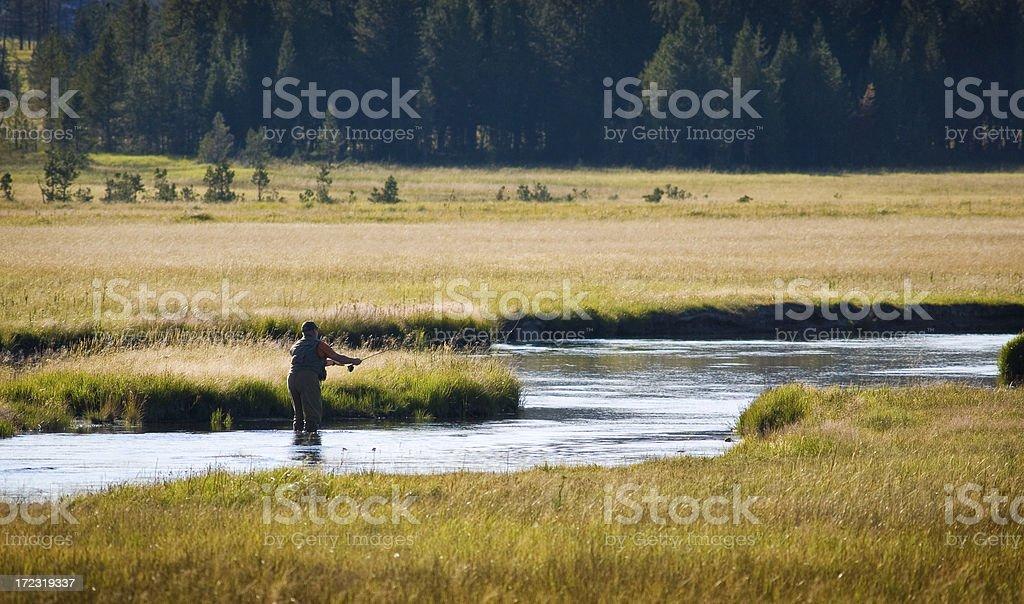 evening fly fishing stock photo