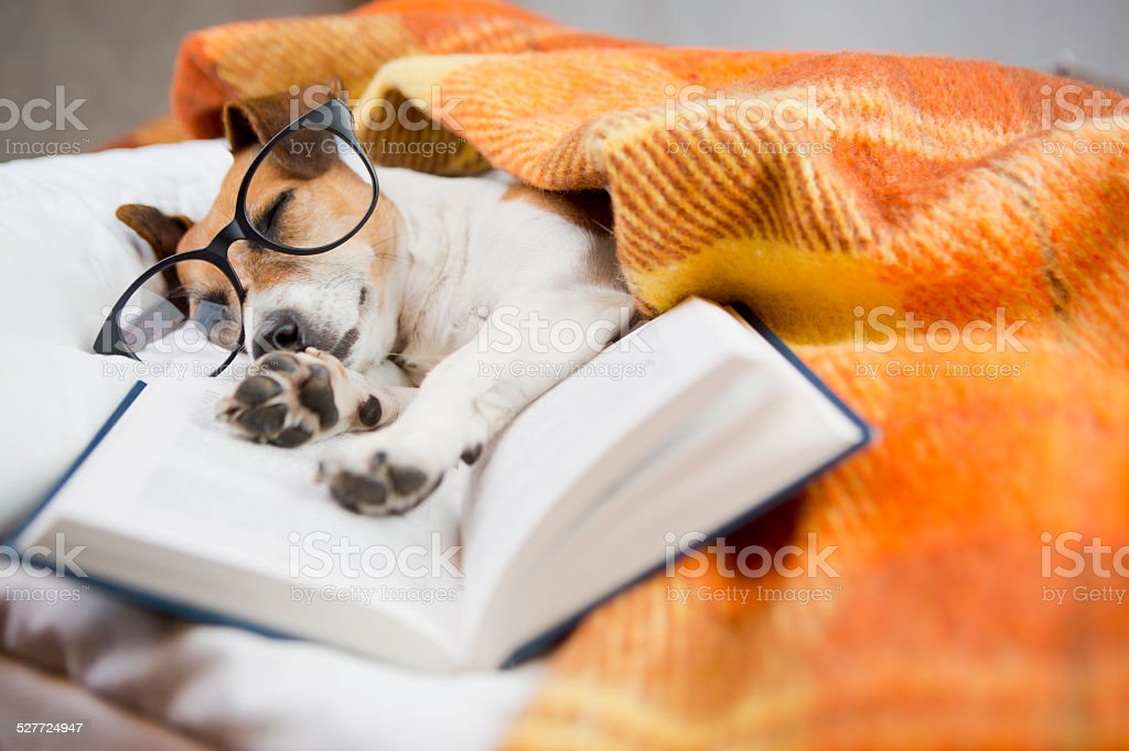 evening homeliness dog stock photo