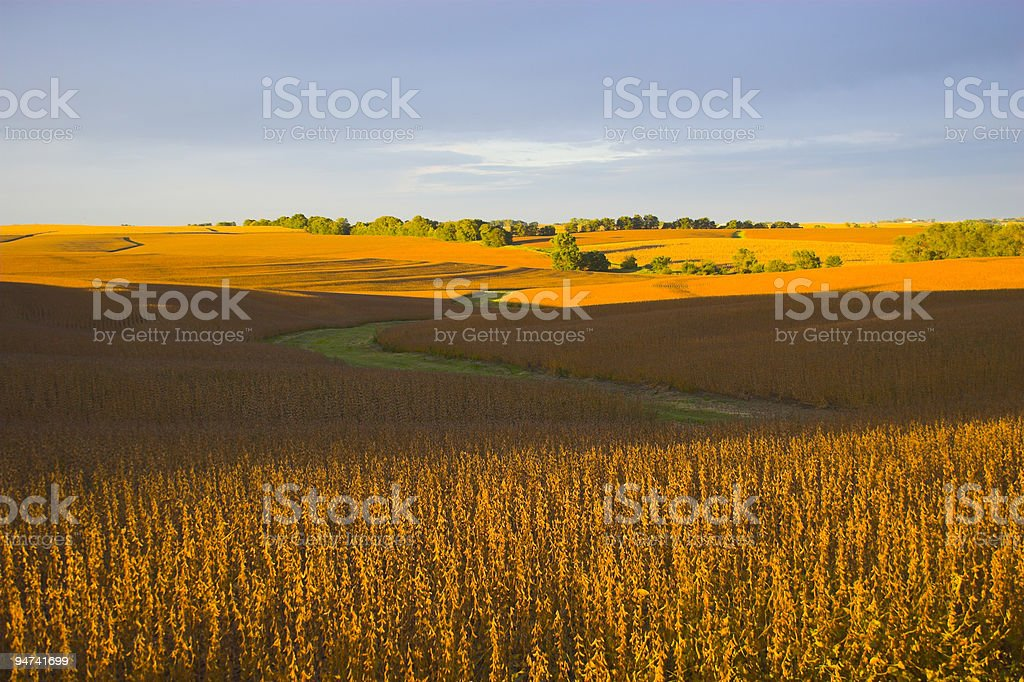 Evening in the Heartland royalty-free stock photo