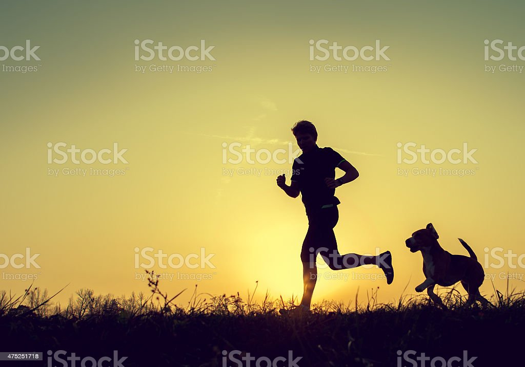 Evening jogging with beagle pet stock photo
