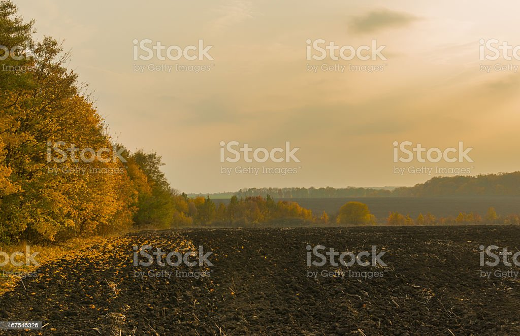 Evening landscape with agricultural fields stock photo