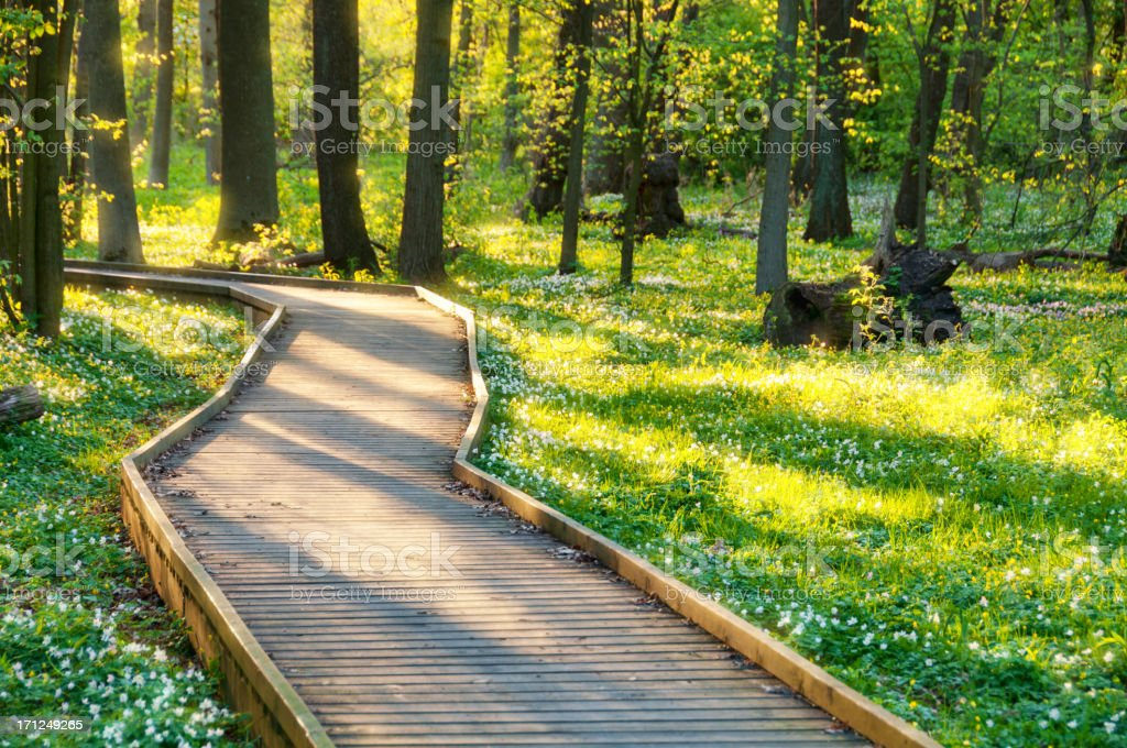 Evening light in fairy tale forest royalty-free stock photo