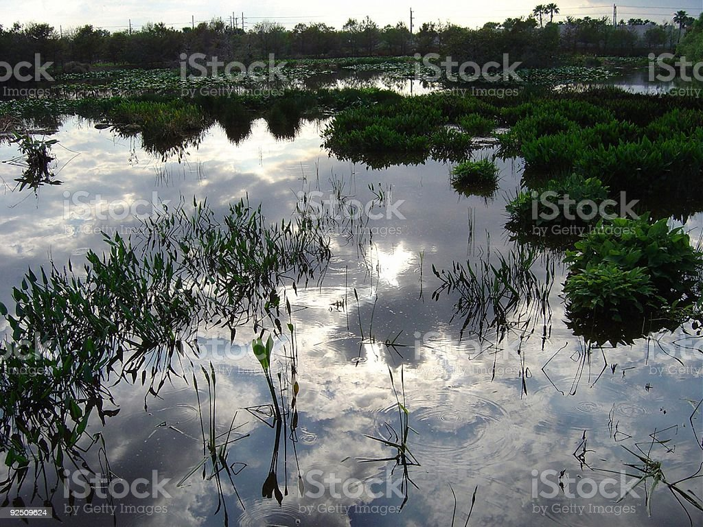 Evening light over Florida wetlands royalty-free stock photo