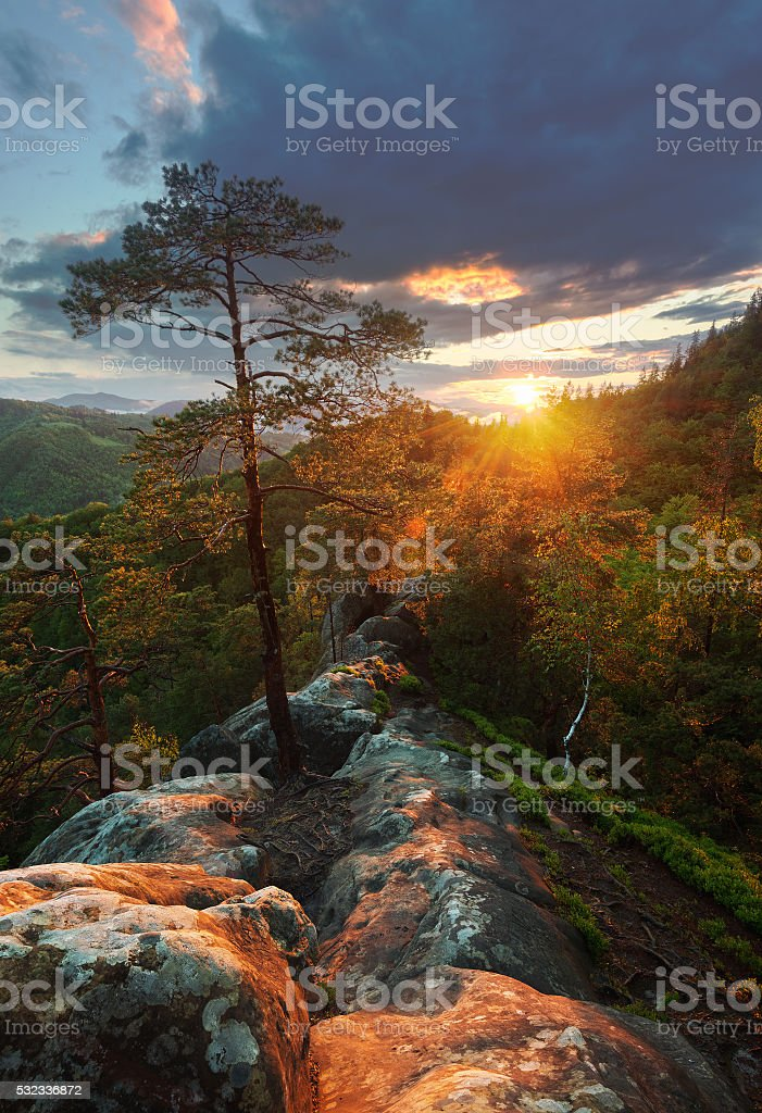 Evening on the cliff over the forest stock photo