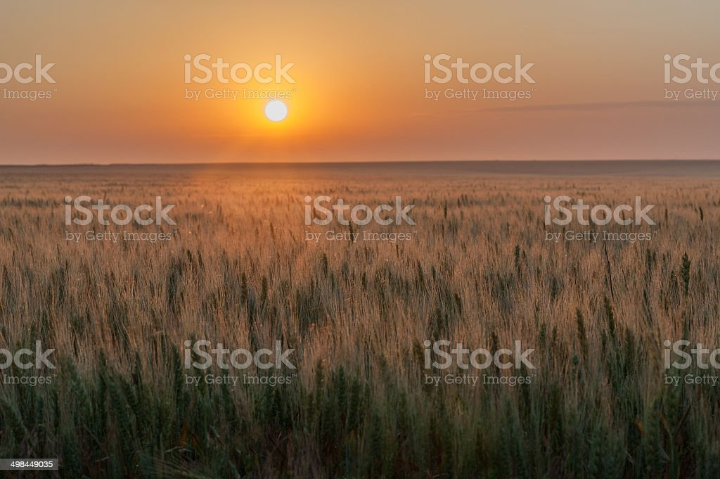 Evening on the Prairie stock photo