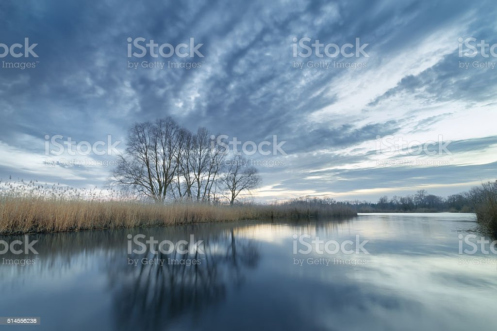 evening photo bulrush stock photo