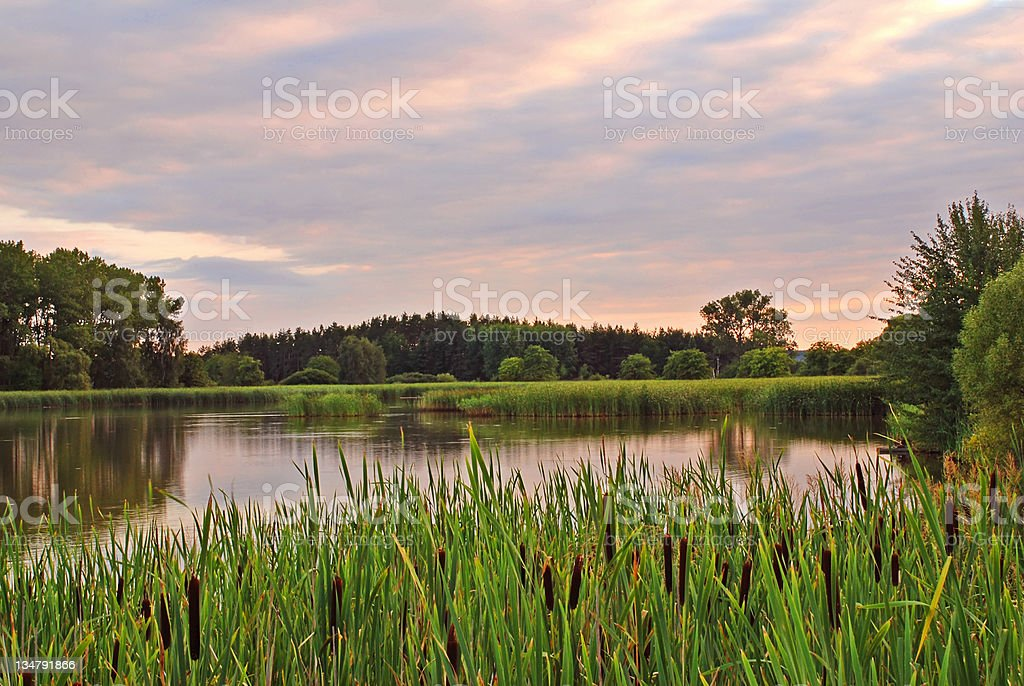 Evening pond stock photo
