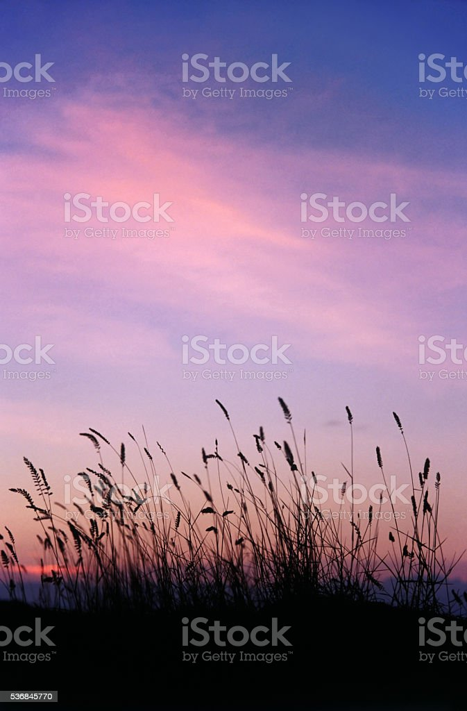 Evening red sky stock photo