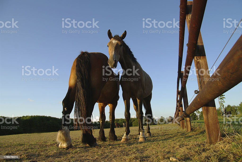 Evening scene in the country royalty-free stock photo