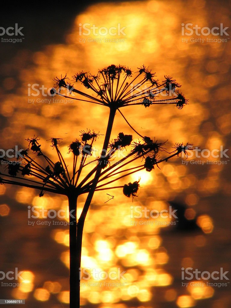 Evening silhouette royalty-free stock photo