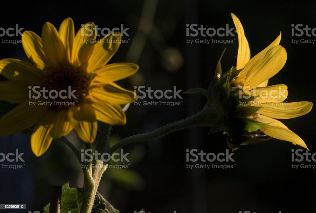 Evening sun stock photo