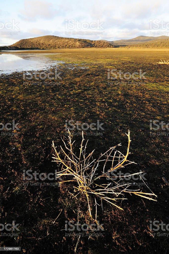 Evening swamp stock photo