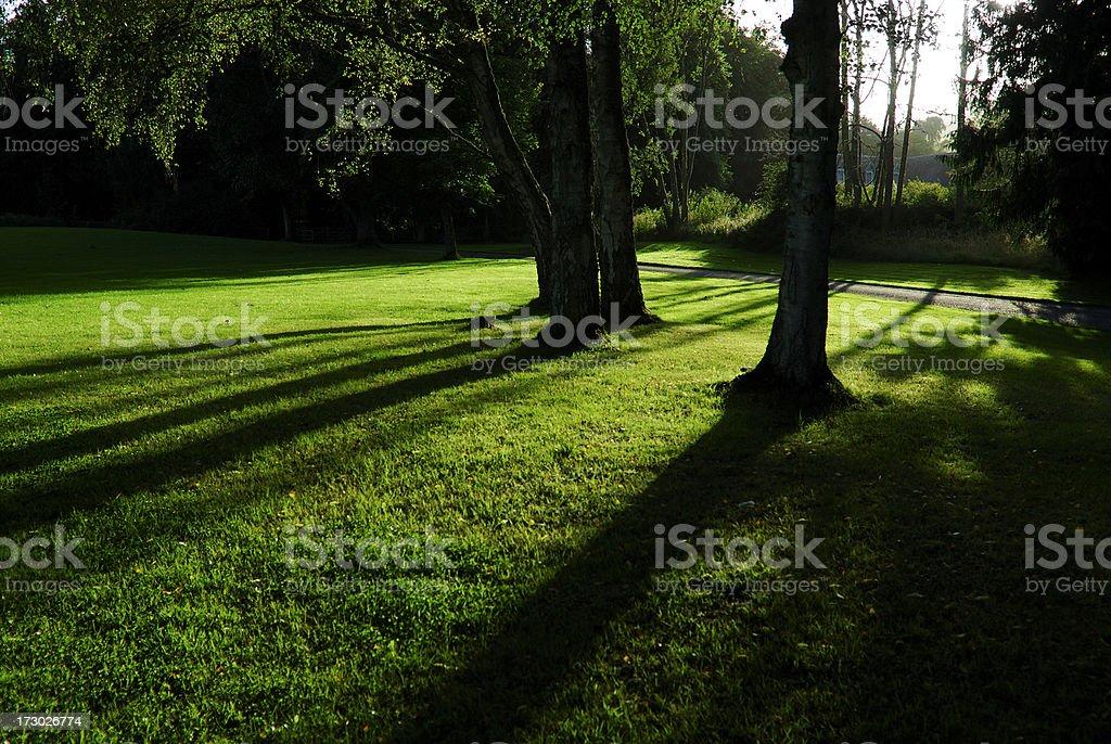 Evening Trees stock photo