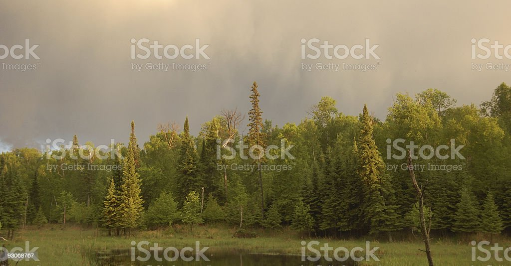 Evening Wetlands 2 royalty-free stock photo