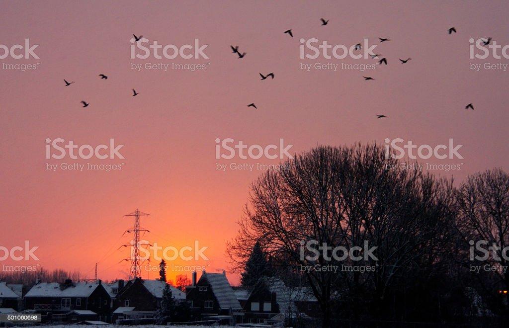 Evening winter silhouette stock photo