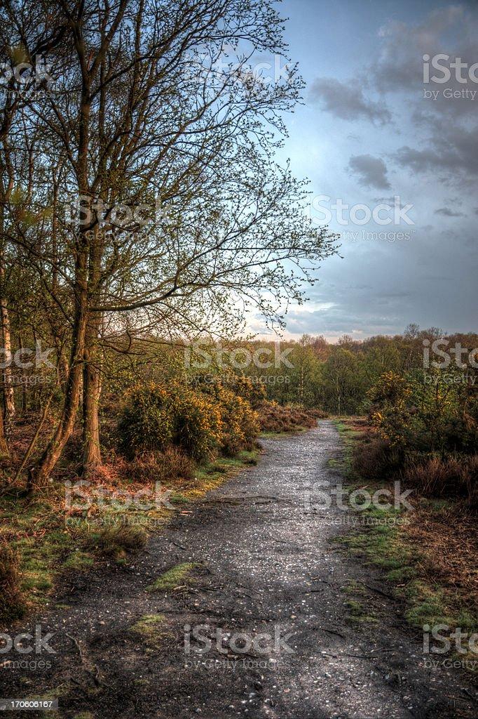 Soirée Woodland chemin photo libre de droits