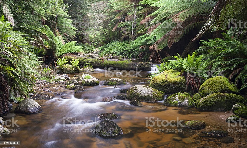 Evercreech Forest royalty-free stock photo