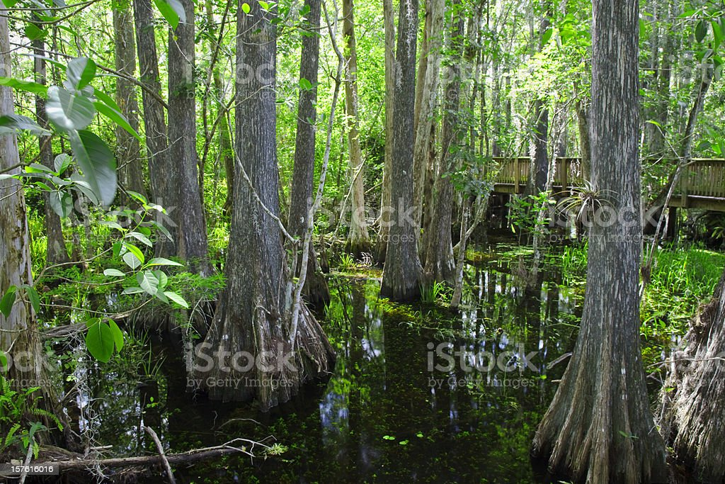 Everglades Boardwalk stock photo