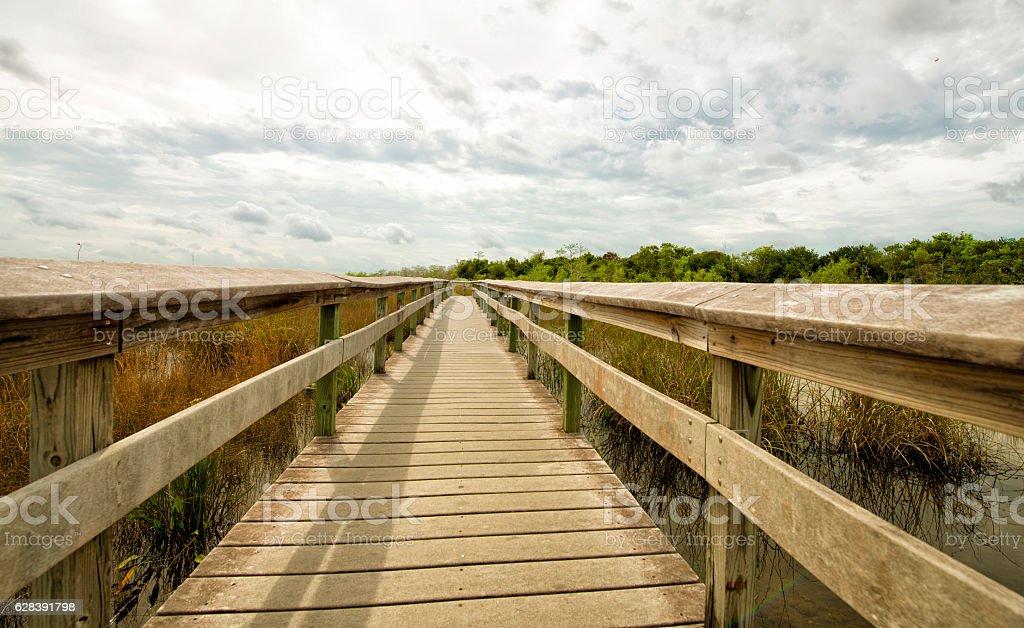 Everglades, Florida stock photo